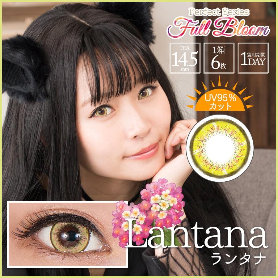 Perfect Series Full Bloom 1 Day - Lantana